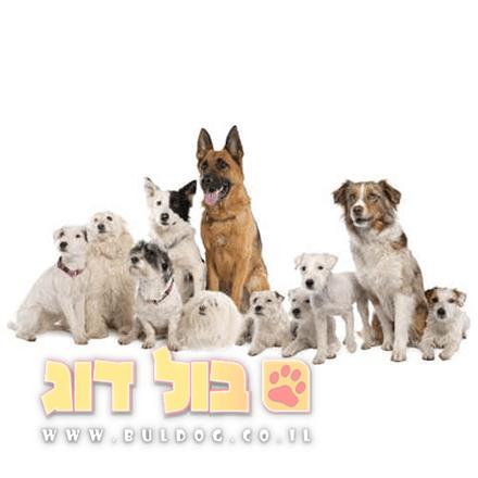 איך להתאים מזון לפי גיל הכלב ומשקלו