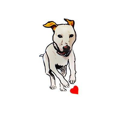 כלבנות טיפולית ואילוף כלבים - ענתבי יעל חנות חיות בולדוג אילוף כלבים