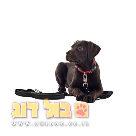 כלב - גידול כלב
