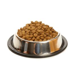 מזון יבש לכלב