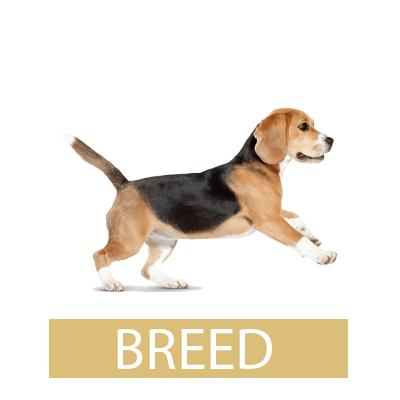 royal canin breed רויאל קנין לפי גזע