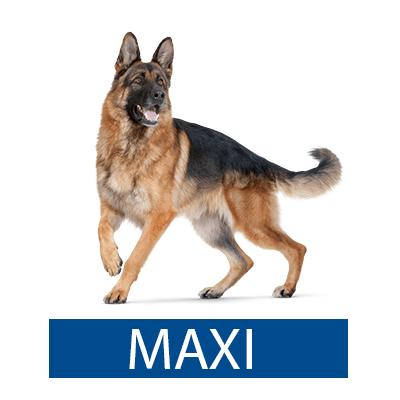 royal canin maxi רויאל קנין מקסי