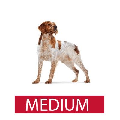 royal canin medium רויאל קנין מדיום