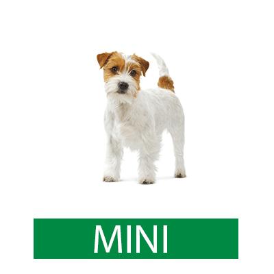 royal canin mini רויאל קנין מיני