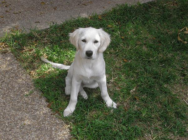 גולדן בן 4 חודשים