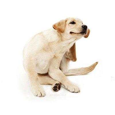 אלרגיה אצל כלבים