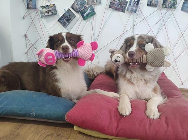 כלבים משחקים בובת חברים
