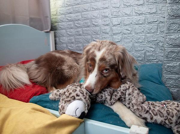 כלב עם צעצוע קונג