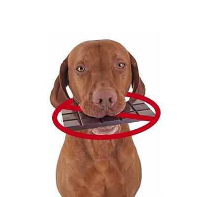 מה לא לתת לכלב לאכול מה אסור לכלבים