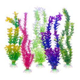 מבצע 5 צמחים לאקווריום