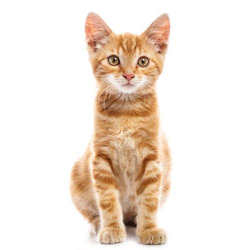 מוצרים לחתולים בולדוג