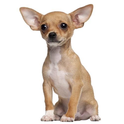 מוצרים-לכלבים-תמונה