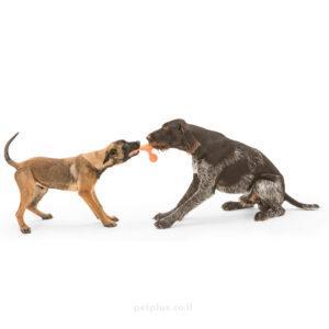 כלבים-משחקים-צעצוע-סקאמפ