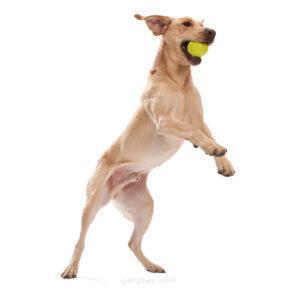 כלב-גדול-משחק-עם-צעצוע-לכלב-ווסט-פאו-ג'יבי